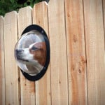 Fence Window For Dogs