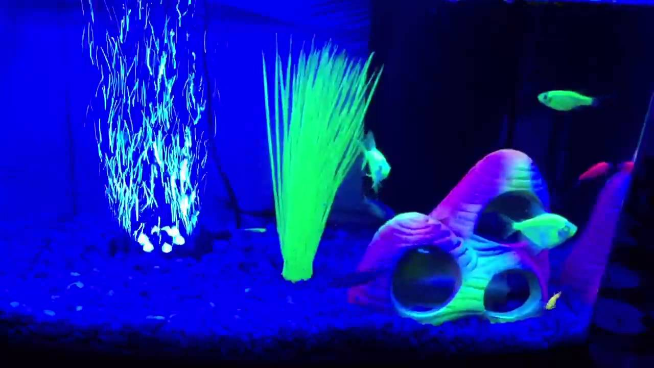 glowing fish tank