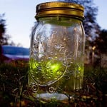 Electronic Firefly In a Jar