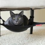Cat Hammock 12