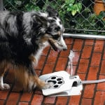 Doggie Water Fountain 1