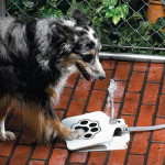 Doggie Water Fountain 8