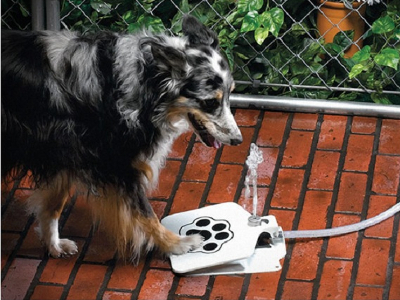 Doggie Water Fountain 1