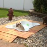 Dog Bone Pool
