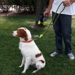 Misting Dog Leash 2
