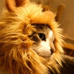 Lion Cat Hat 3