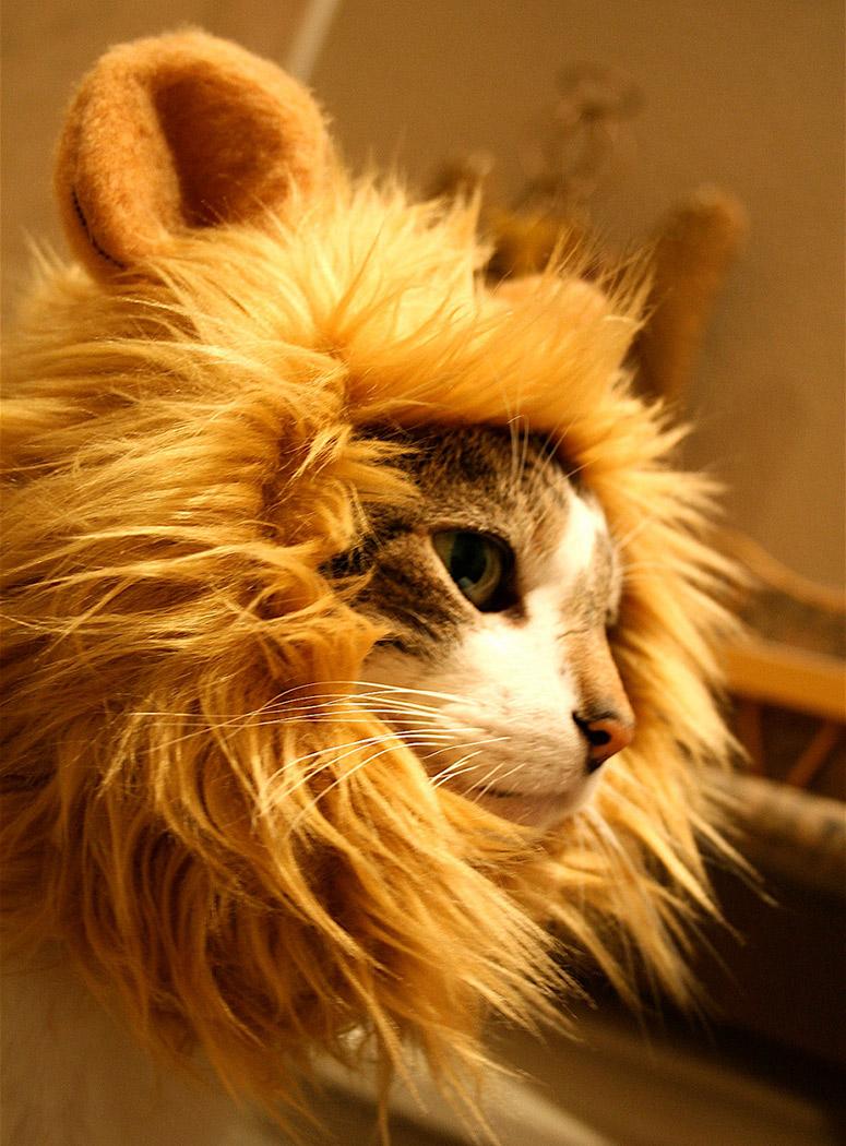 Lion Cat Hat 1