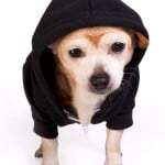 Pet Hoodie