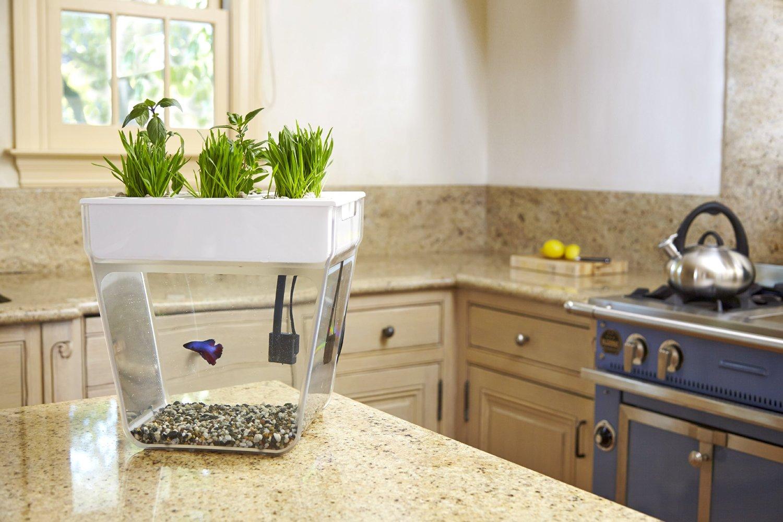 Fish Plant Tank