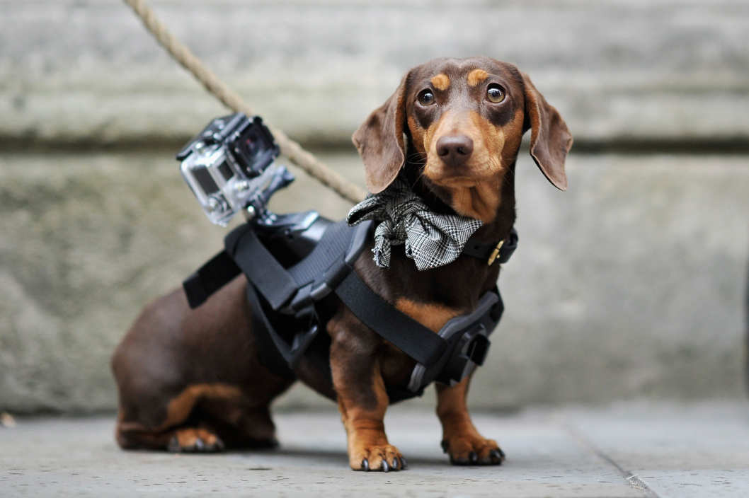 Gopro Camera Dog Collar