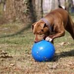 Super Tough Pet Ball