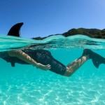 Strap On Shark Fin