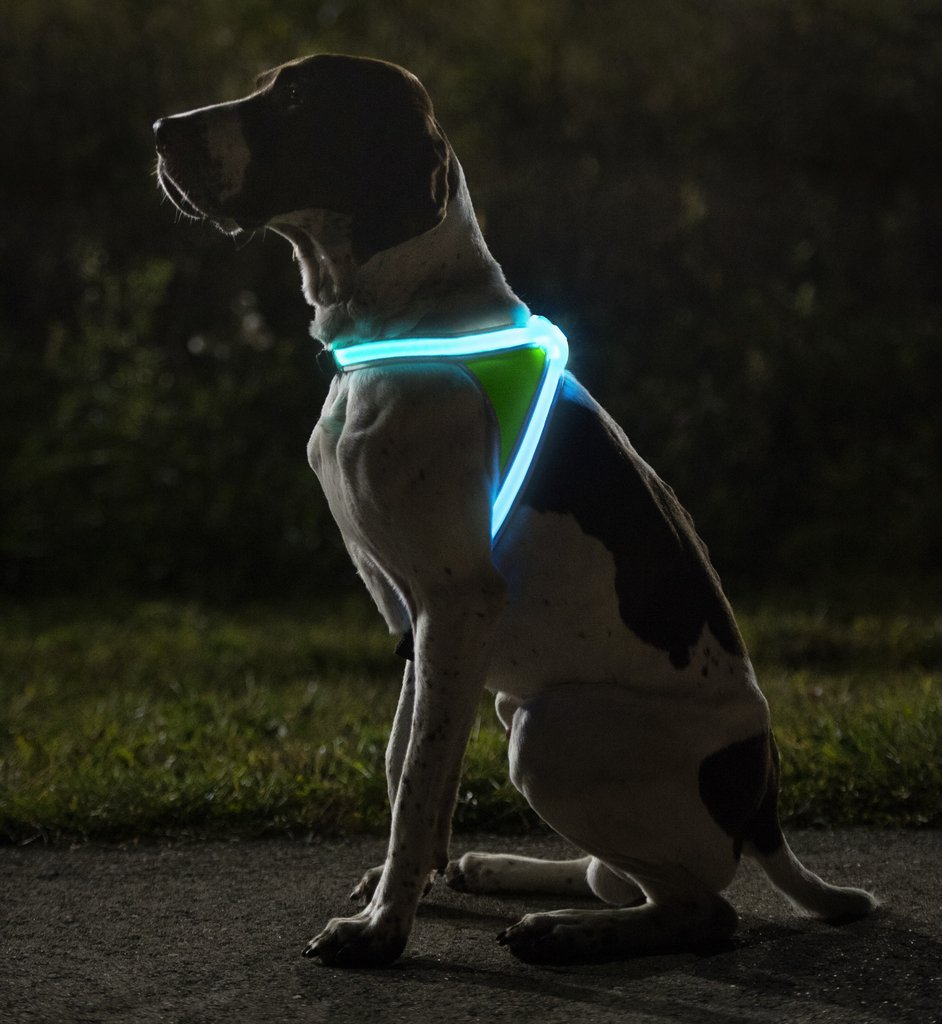 Reflective LED Dog Vest